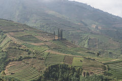 Terraced fields on the Dieng Plateau, Java Stock Photos