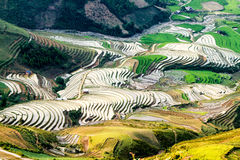Terraced fields of the ethnic people in Northern Vietnam Stock Photos