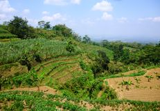Terraced fields on hills Stock Image