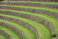 Terraced fields in the Inca archeological area of Pisac, Peru. 