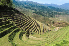 Terraced fields landscape Stock Photos