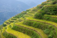 Terraced fields in Longsheng Stock Photos