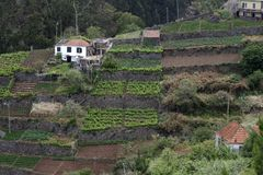 Terraced Fields of Madeira Royalty Free Stock Photos