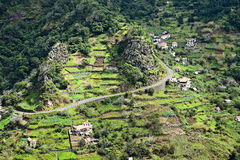 Terraced fields in Madeira in the springtime Stock Photos