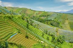 Terraced fields in Majalengka. Aerial view of terraced fields of leek under blue sky in Majalengka, Indonesia Stock Photos