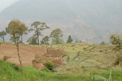 Terraced Fields on a mountain in Nepal. These are terraced fields on a mountain slope in Nepa on an overcast day Royalty Free Stock Photos