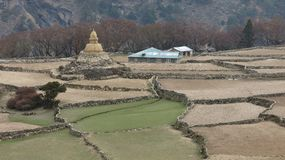 Terraced fields and old Stupa Stock Photo