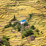 Terraced fields of paddy field and primitive small house Royalty Free Stock Image