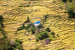 Terraced fields of paddy field and primitive small house Royalty Free Stock Images