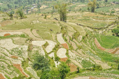 Terraced fields Royalty Free Stock Photos