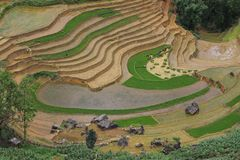 Terraced fields in Sa Pa - Lao Cai - North Vietnam royalty free stock image