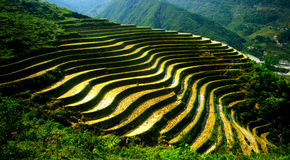 Terraced fields, Sapa royalty free stock image