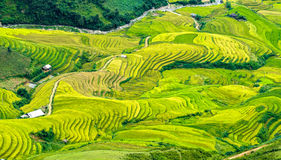 Terraced fields stretching down the valley. With the cultivated rice in layers down into the valley truly art. It was voted in the top 10 beautiful landscapes stock image