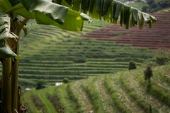 Terraced fields in Thailand royalty free stock image