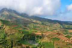 Terraced fields under white clouds Royalty Free Stock Photo