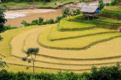 Terraced fields, Yen Bai province, Vietnam Royalty Free Stock Images