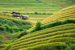 Terraced fields, Yen Bai province, Vietnam Royalty Free Stock Photo