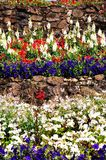 Terraced flowerbeds, Tamworth. Stock Photos