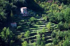 Terraced garden on mountain hill Royalty Free Stock Images
