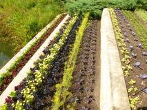 Terraced Gardens Stock Photo
