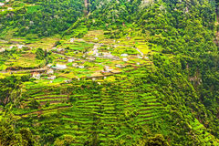 Terraced hills, Madeira Royalty Free Stock Images