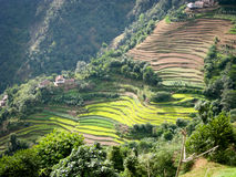 Terraced Hillside of Nepal Royalty Free Stock Images