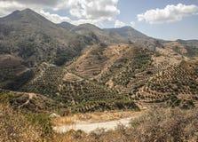 Terraced hillsides at Polyrenia, Crete, Greece. Terraced hillsides and distant hills from path leading to  Polyrenia, Crete, Greece Stock Image