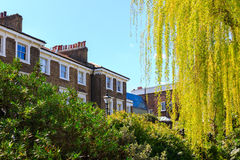 Terraced Houses Behind Bushes and Tree. Victorian terraced houses behind green rhododendron bushes and a willow tree on a sunny day stock images