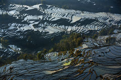 Terraced landscape, Yunnan, China Stock Image