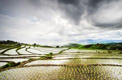 Terraced paddy field Royalty Free Stock Photo