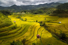 Terraced Paddy Field in High Mountains at Mea La Noi City , Mae Hong Son Royalty Free Stock Image