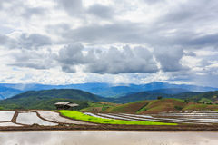 Terraced Paddy Field in Mae-Jam Village , Chaingmai Province , T Stock Photo