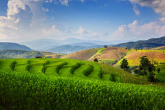 Terraced Paddy Field Royalty Free Stock Images