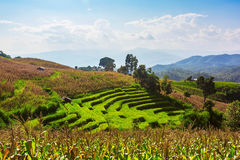 Terraced Paddy Field in Mae-Jam Village Stock Photo