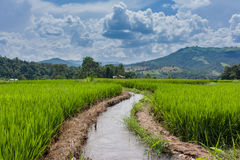 Terraced Paddy Field in Mae-Jam Village , Chaingmai Stock Photography