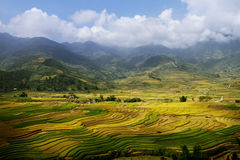 Terraced Paddy Fields Stock Photo
