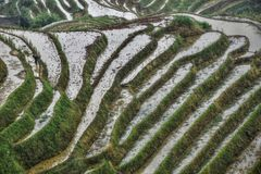 The terraced paddy fields in Guangxi Zhuang Autonomous Region in China. Hidden in the clouds Stock Photo