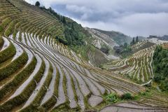 The terraced paddy fields in Guangxi Zhuang Autonomous Region in China. Hidden in the clouds royalty free stock image