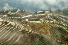 The terraced paddy fields in Guangxi Zhuang Autonomous Region in China. Hidden in the clouds Royalty Free Stock Images