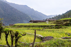Terraced plantation on hill slopes in Nepal Royalty Free Stock Images