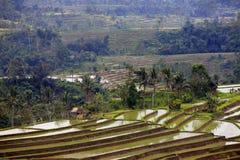 Terraced rice Stock Photos
