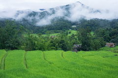 Terraced rice farm in country side Stock Photos