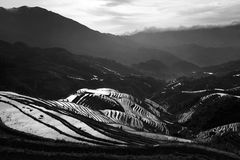 Terraced rice field. Morning scene in Longji terraced rice fields, China, in black and white Royalty Free Stock Images