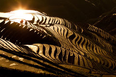 Terraced rice field. Sunlight reflected off the water filled terraces on the hills of Longji, China Royalty Free Stock Images