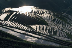 Terraced rice field. Sunlight reflected off the water filled terraces on the hills of Longji, China Stock Image