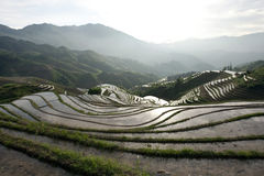 Terraced rice field. Morning scene in the terraced rice fields on the hills of Longji, China Stock Photo