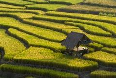 Terraced Rice Field. Green Terraced Rice Field in Chiangmai, Thailand Stock Photos