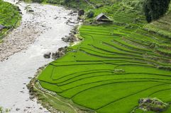 Terraced Rice Field Stock Image