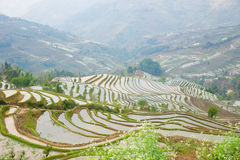 Terraced rice field Royalty Free Stock Photo