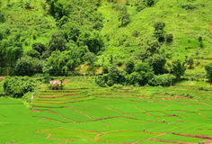 Terraced rice field in Chaloem Phra Kiat district Stock Images